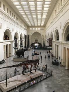 The Field Museum - Sue the T-Rex!